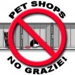 No ai Pet shop