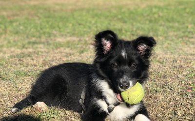 Incontro cuccioli dai 3 ai 6 mesi